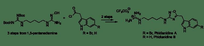 Phidianidine A and B